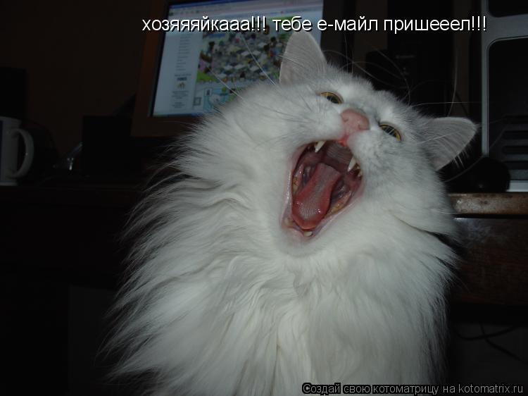 Котоматрица: хозяяяйкааа!!! тебе е-майл пришееел!!!