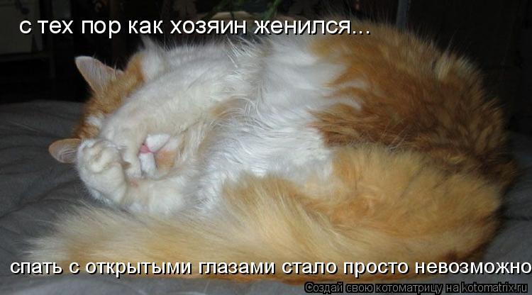 Котоматрица: с тех пор как хозяин женился... спать с открытыми глазами стало просто невозможно!