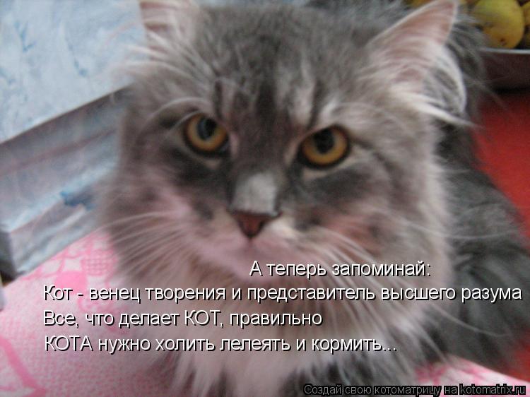 Котоматрица: А теперь запоминай: Кот - венец творения и представитель высшего разума Все, что делает КОТ, правильно КОТА нужно холить лелеять и кормить...