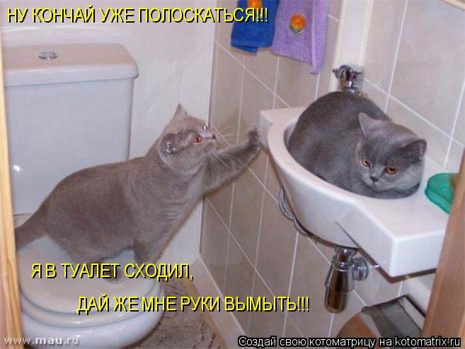Котоматрица: НУ КОНЧАЙ УЖЕ ПОЛОСКАТЬСЯ!!! Я В ТУАЛЕТ СХОДИЛ, ДАЙ ЖЕ МНЕ РУКИ ВЫМЫТЬ!!!