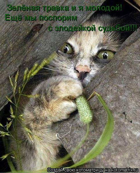 Котоматрица: Зелёная травка и я молодой! Ещё мы поспорим  с злодейкой судьбой!!!