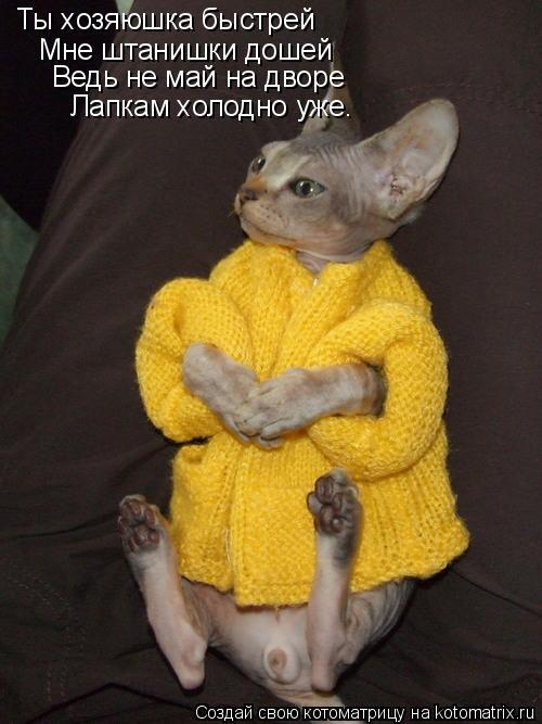 Котоматрица: Ты хозяюшка быстрей Мне штанишки дошей  Ведь не май на дворе Лапкам холодно уже.