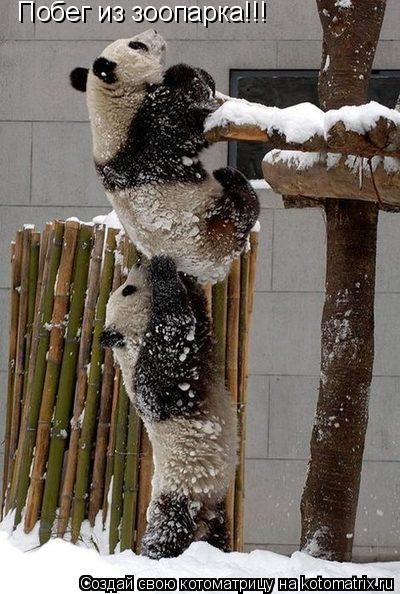 Котоматрица: Побег из зоопарка!!!