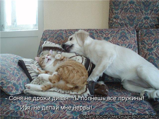 Котоматрица: - Соня,не дрожи диван: ты лопнешь все пружины!  - Изя, не делай мне нервы!