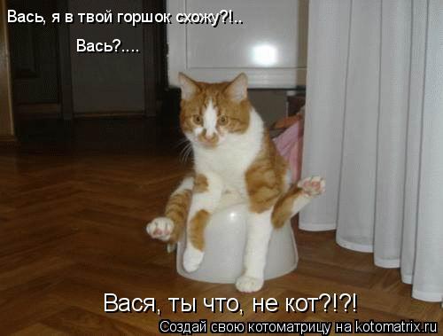 Котоматрица: Вась, я в твой горшок схожу?!.. Вась?.... Вася, ты что, не кот?!?!