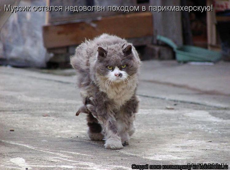 Котоматрица: Мурзик остался недоволен походом в парикмахерскую!
