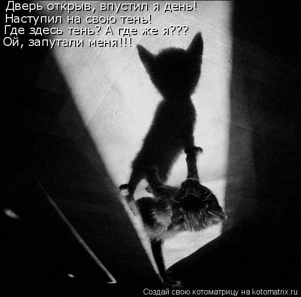 Котоматрица: Дверь открыв, впустил я день! Наступил на свою тень! Где здесь тень? А где же я??? Ой, запутали меня!!!