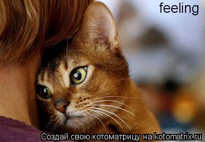 Котоматрица: feeling