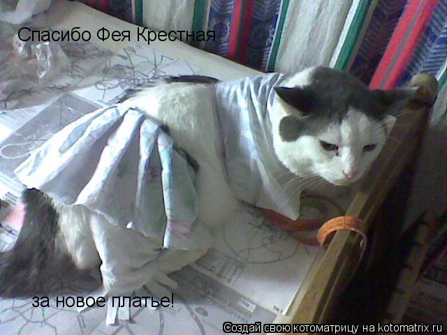 Котоматрица: Спасибо Фея Крестная за новое платье!