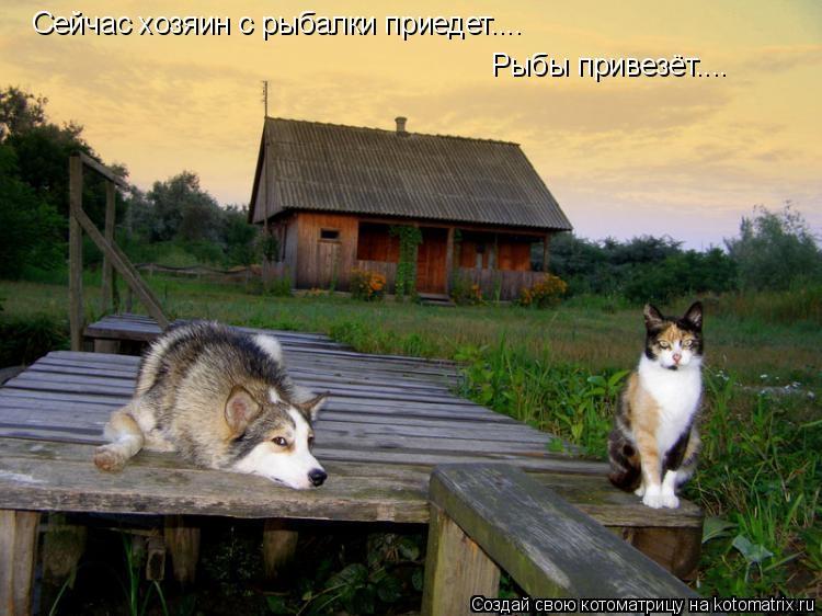 Котоматрица: Сейчас хозяин с рыбалки приедет.... Рыбы привезёт....
