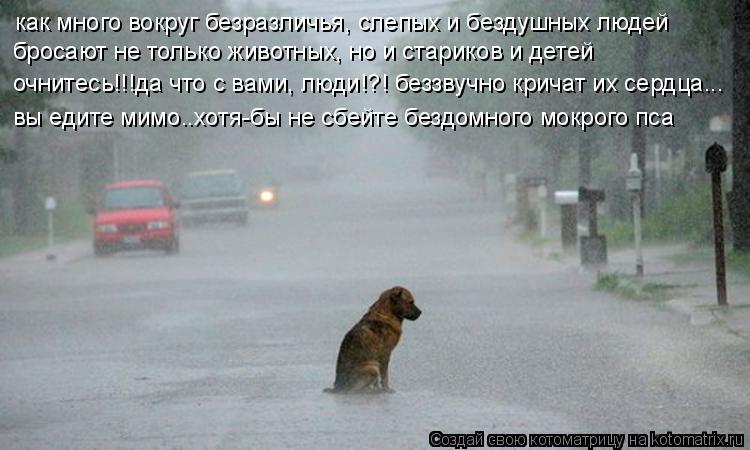 Котоматрица: как много вокруг безразличья, слепых и бездушных людей бросают не только животных, но и стариков и детей очнитесь!!!да что с вами, люди!?! безз