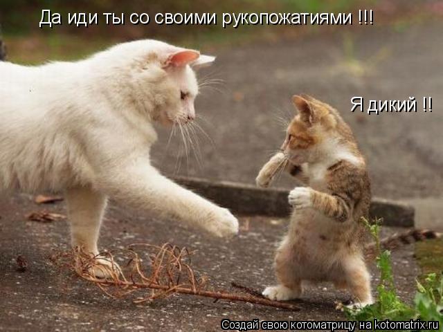 Котоматрица: Да иди ты со своими рукопожатиями !!! Я дикий !!
