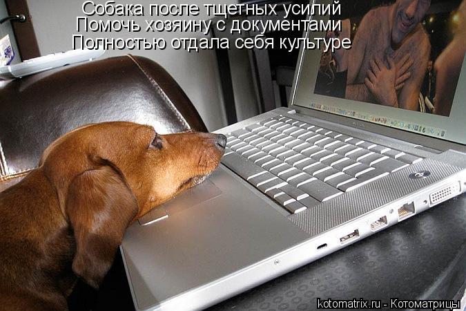 Котоматрица: Собака после тщетных усилий Помочь хозяину с документами Полностью отдала себя культуре