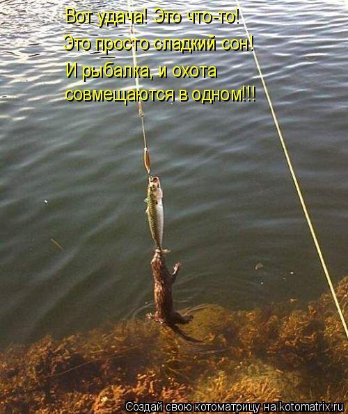 Котоматрица: Вот удача! Это что-то! И рыбалка, и охота совмещаются в одном!!! Это просто сладкий сон!