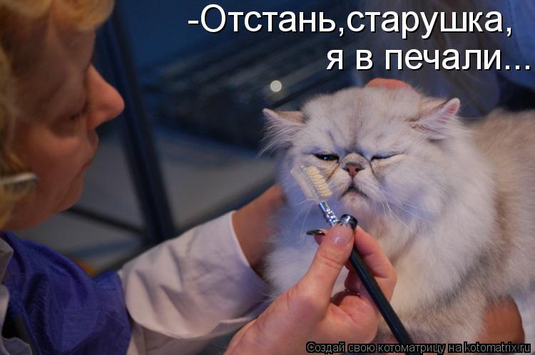 Котоматрица: -Отстань,старушка,  я в печали...