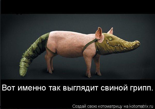 Котоматрица: Вот именно так выглядит свиной грипп.