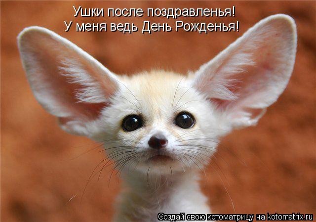 Котоматрица: Ушки после поздравленья! У меня ведь День Рожденья!