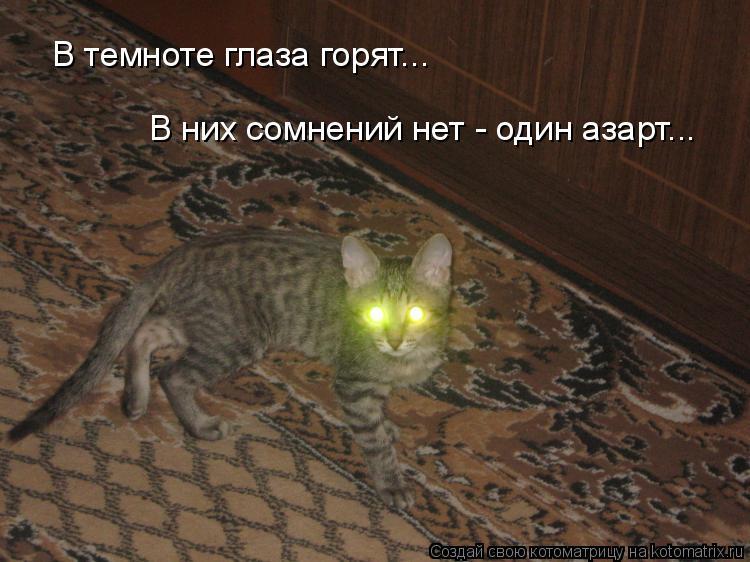 Котоматрица: В темноте глаза горят... В них сомнений нет - один азарт...