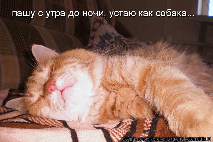 Котоматрица: пашу с утра до ночи, устаю как собака...