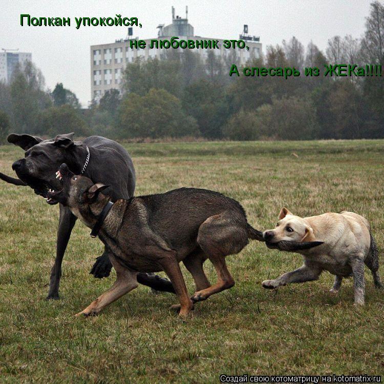 Котоматрица: Полкан упокойся, не любовник это, А слесарь из ЖЕКа!!!!