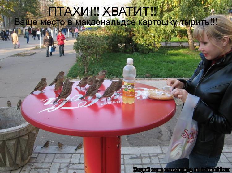 Котоматрица: ПТАХИ!!! ХВАТИТ!! Ваше место в макдональдсе картошку тырить!!!