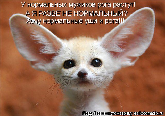 Котоматрица: У нормальных мужиков рога растут! А Я РАЗВЕ НЕ НОРМАЛЬНЫЙ? Хочу нормальные уши и рога!!!