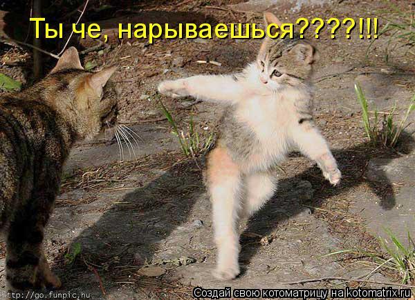 Котоматрица: Ты че, нарываешься????!!!