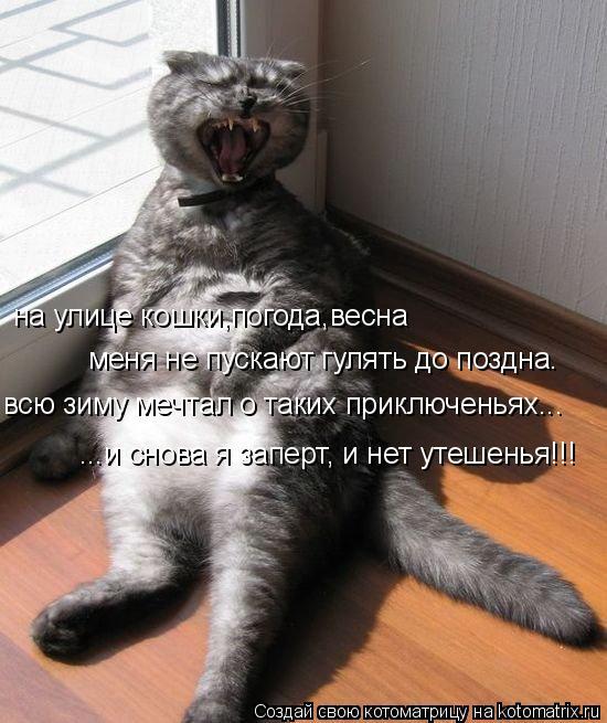 Котоматрица: на улице кошки,погода,весна меня не пускают гулять до поздна. всю зиму мечтал о таких приключеньях... ...и снова я заперт, и нет утешенья!!!