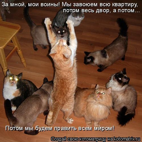 Котоматрица: За мной, мои воины! Мы завоюем всю квартиру, потом весь двор, а потом... Потом мы будем править всем миром!