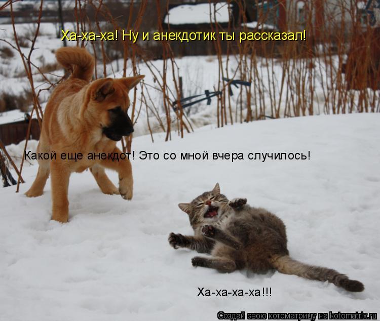 Котоматрица: Ха-ха-ха! Ну и анекдотик ты рассказал! Какой еще анекдот! Это со мной вчера случилось! Ха-ха-ха-ха!!!