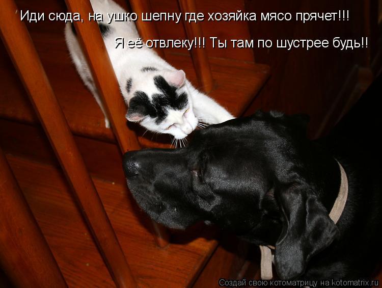 Котоматрица: Иди сюда, на ушко шепну где хозяйка мясо прячет!!! Я её отвлеку!!! Ты там по шустрее будь!!