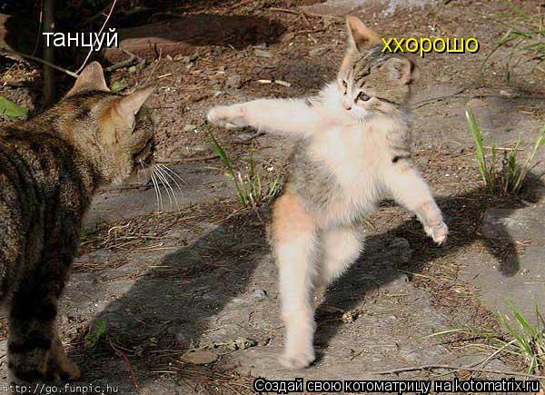 Котоматрица: танцуй ххорошо