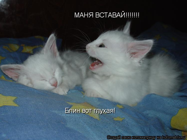 Котоматрица: МАНЯ ВСТАВАЙ!!!!!!! Блин вот глухая!