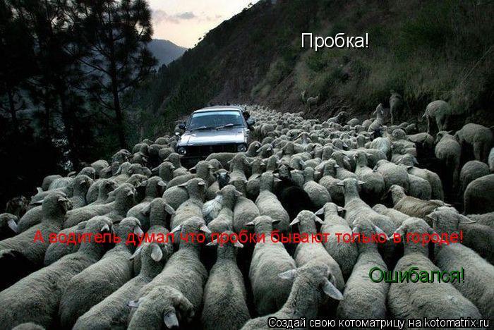 Котоматрица: Пробка! А водитель думал что пробки бывают только в городе! Ошибался!