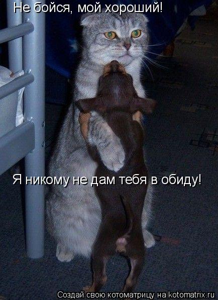 Котоматрица: Не бойся, мой хороший!  Я никому не дам тебя в обиду!