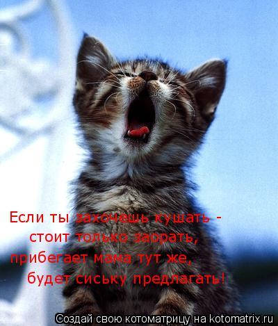 Котоматрица: Если ты захочешь кушать - стоит только заорать, прибегает мама тут же, будет сиську предлагать!