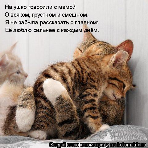Котоматрица: На ушко говорили с мамой О всяком, грустном и смешном. Я не забыла рассказать о главном: Её люблю сильнее с каждым днём.