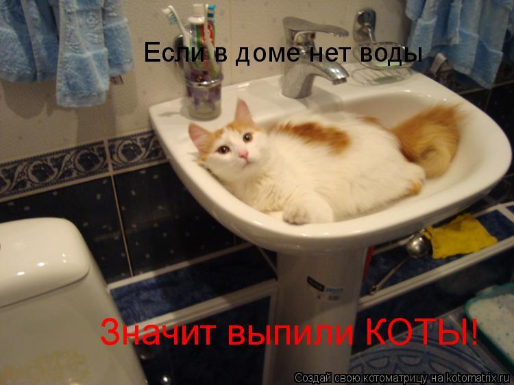 Котоматрица: Если в доме нет воды Значит выпили КОТЫ!