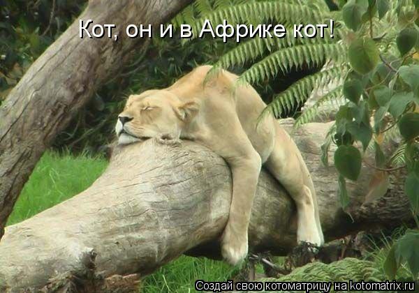 Котоматрица: Кот, он и в Африке кот!
