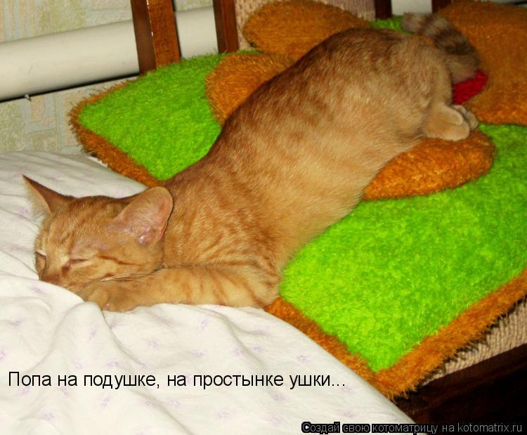 Котоматрица: Попа на подушке, на простынке ушки...