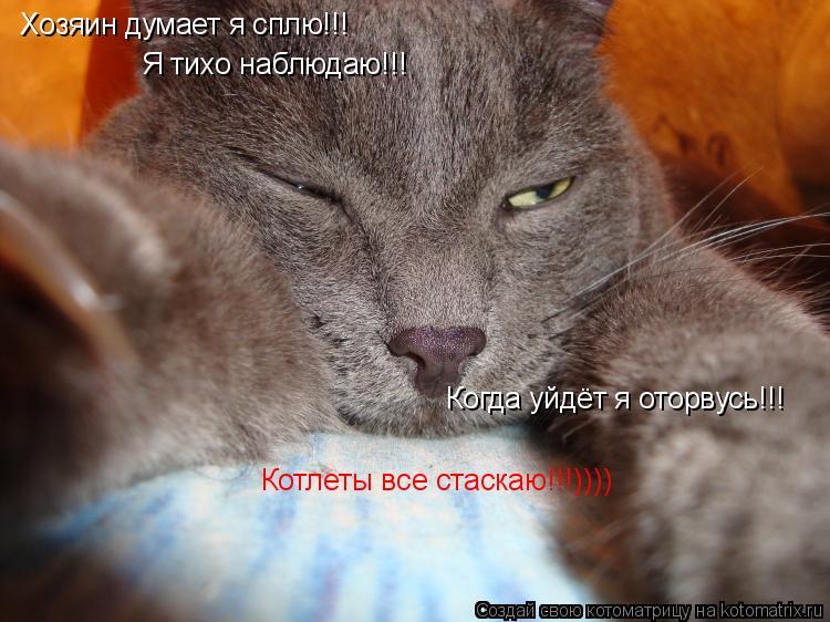 Котоматрица: Хозяин думает я сплю!!! Я тихо наблюдаю!!! Когда уйдёт я оторвусь!!! Котлеты все стаскаю!!!))))