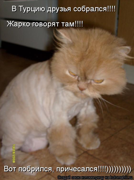 Котоматрица: В Турцию друзья собрался!!!!  Жарко говорят там!!!! Вот побрился, причесался!!!!))))))))))