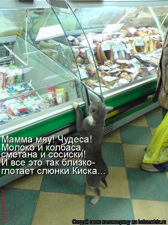 Котоматрица: Мамма мяу! Чудеса! Молоко и колбаса, сметана и сосиски! И все это так близко- глотает слюнки Киска...