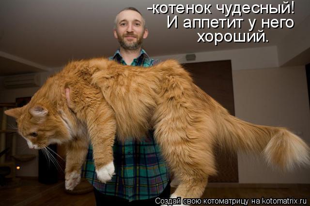Котоматрица: -котенок чудесный!  И аппетит у него хороший.