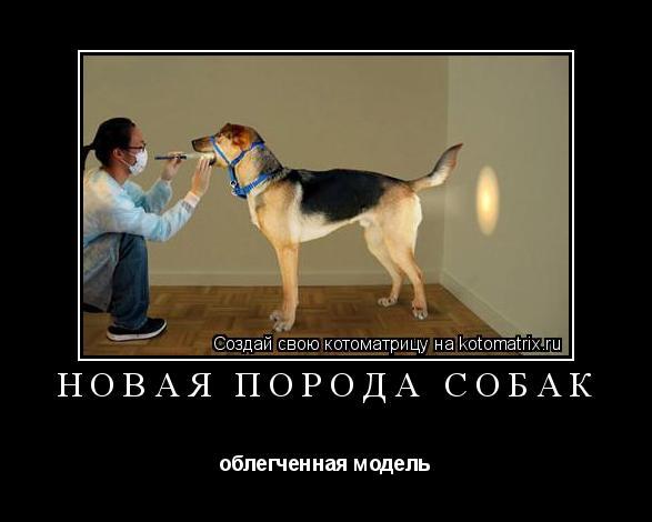Котоматрица: новая порода собак облегченная модель
