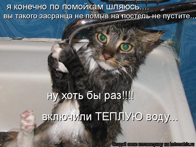 Котоматрица: я конечно по помойкам шляюсь.... вы такого засранца не помыв на постель не пустите... ну хоть бы раз!!!! включили ТЕПЛУЮ воду...
