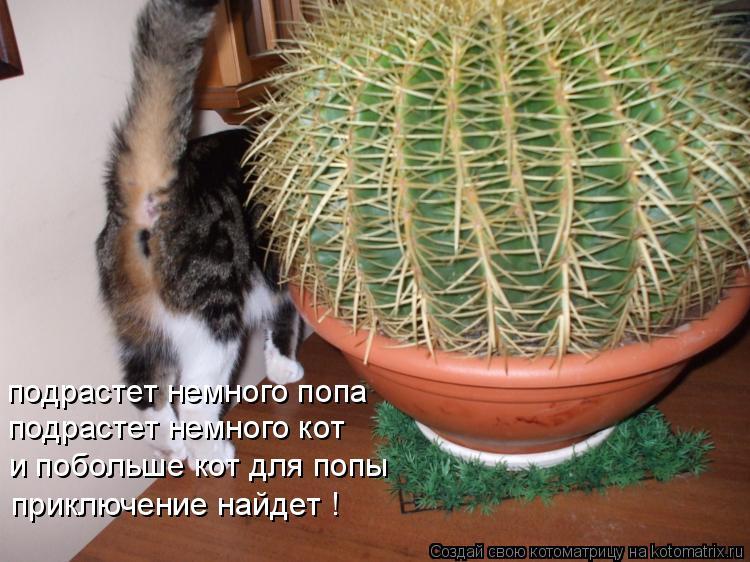Котоматрица: подрастет немного попа подрастет немного кот и побольше кот для попы приключение найдет !