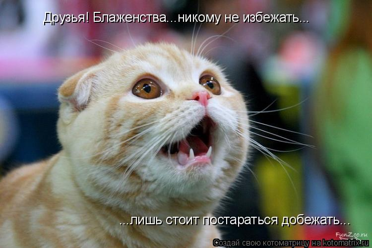Котоматрица: Друзья! Блаженства...никому не избежать... ...лишь стоит постараться добежать...