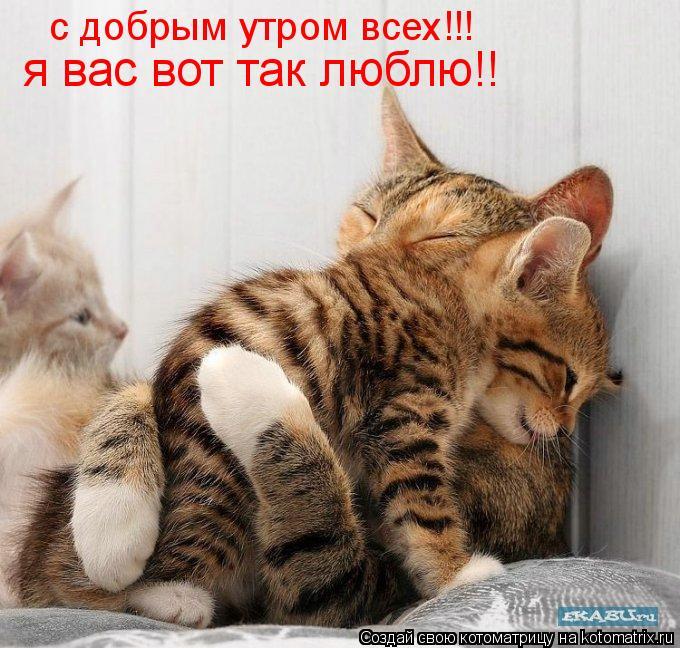 Котоматрица: с добрым утром всех!!! я вас вот так люблю!!