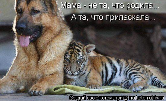 Котоматрица: Мама - не та, что родила... А та, что приласкала...